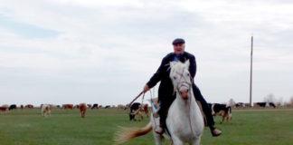 На белом коне - лучшая прогулка.