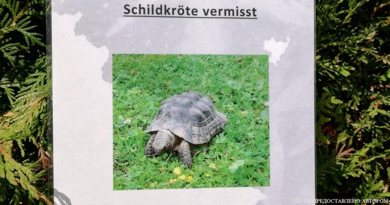 Внимание: черепаха!