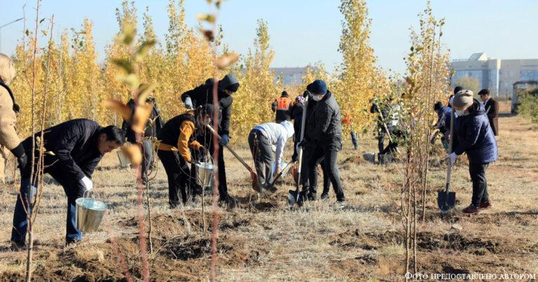 Время сажать деревья
