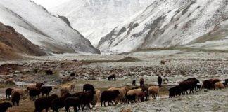 Kirgisistan, wie man es aus Fernsehdokumentationen in Europa kennt | Foto Suzy Blondin