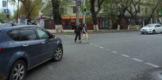 Eine Restwartezeiten anzeigende Ampel in Almaty. | Foto: Elke Kögler