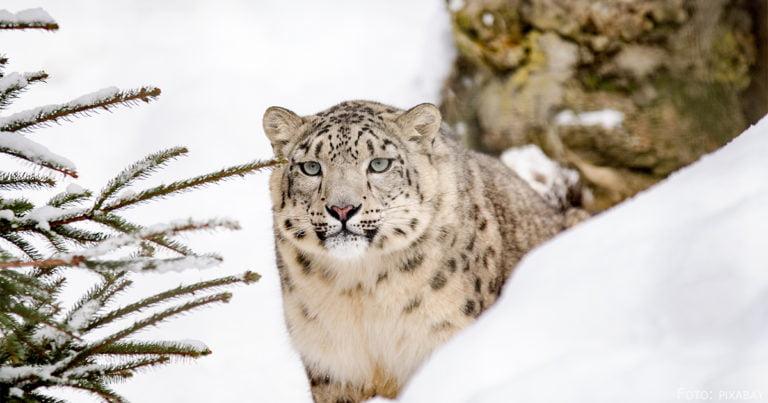 """Der Schneeleopard feiert: 20 Jahre """"Nur Otan"""""""