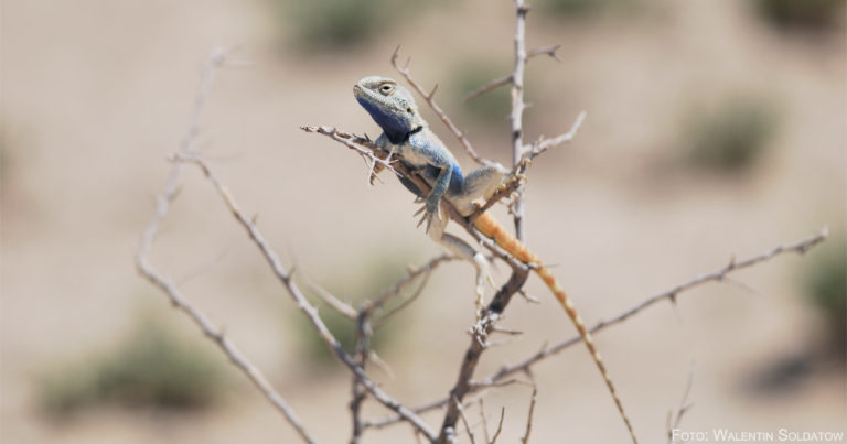 Bilder für den Naturschutz