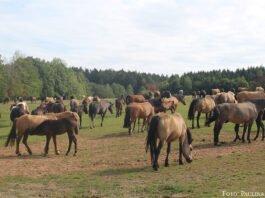 Ganz entspannt: Die Pferde haben bei den Zollmanns alles, was sie brauchen.