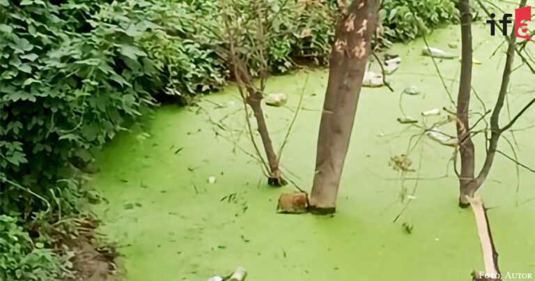 Die Umweltkompetenz als eine Glaubenssache
